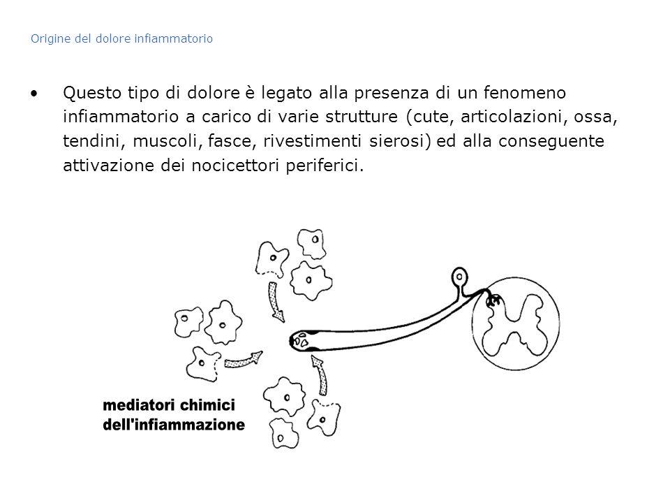 mediatori chimici dell infiammazione