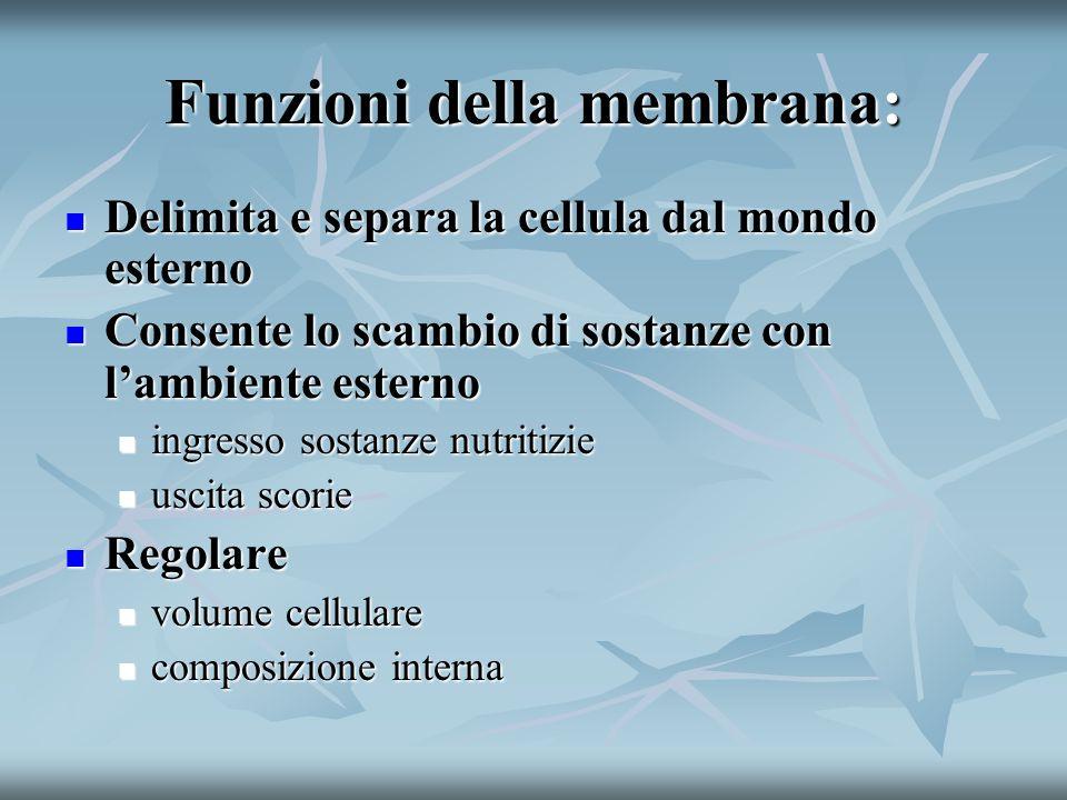 Funzioni della membrana: