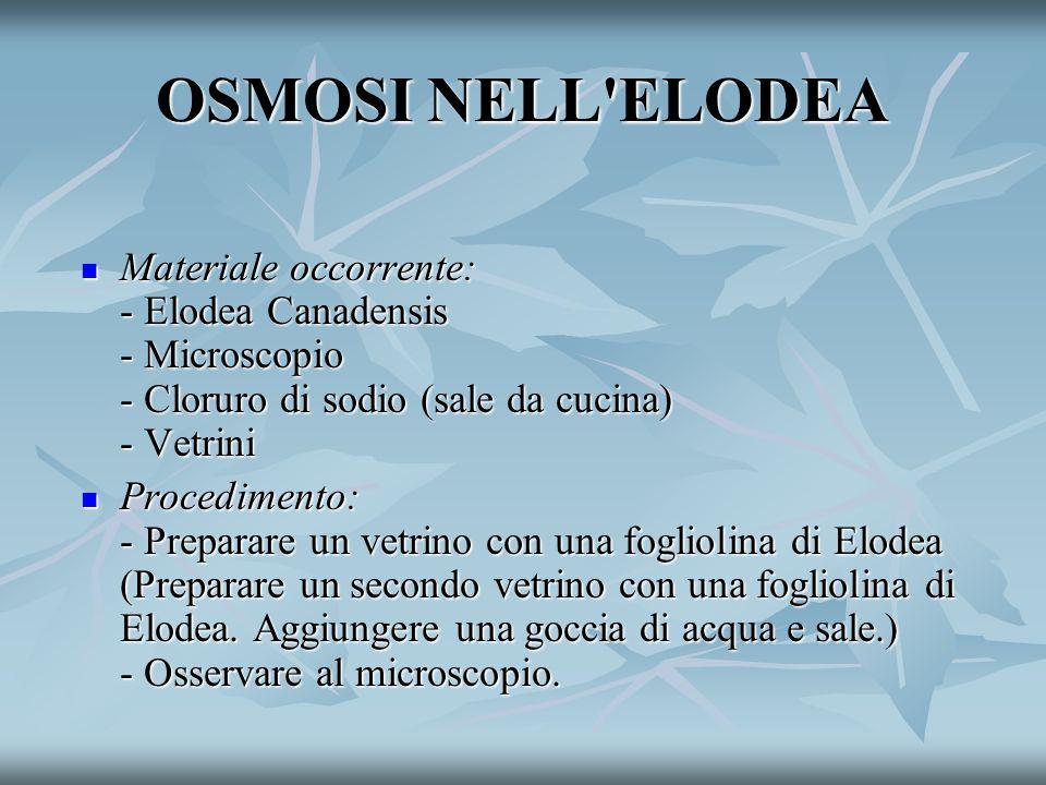 OSMOSI NELL ELODEA Materiale occorrente: - Elodea Canadensis - Microscopio - Cloruro di sodio (sale da cucina) - Vetrini.