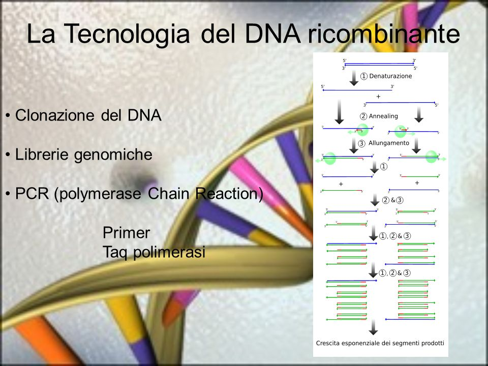 La Tecnologia del DNA ricombinante