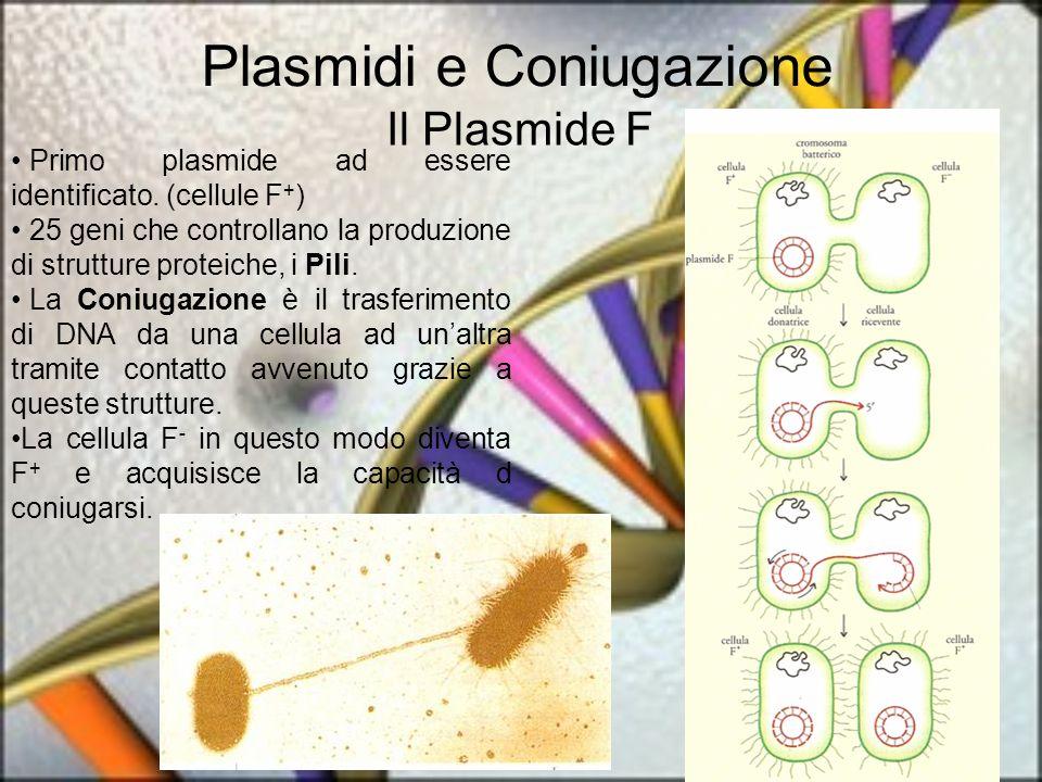 Plasmidi e Coniugazione