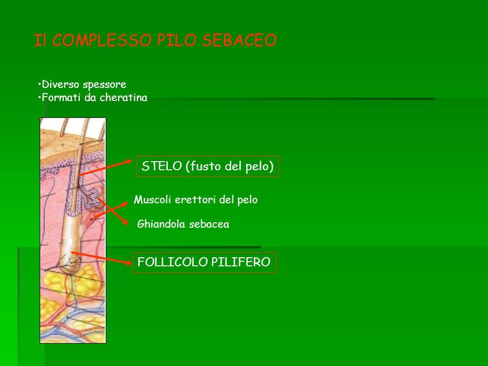 Il COMPLESSO PILO SEBACEO