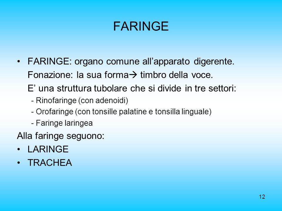 FARINGE FARINGE: organo comune all'apparato digerente.