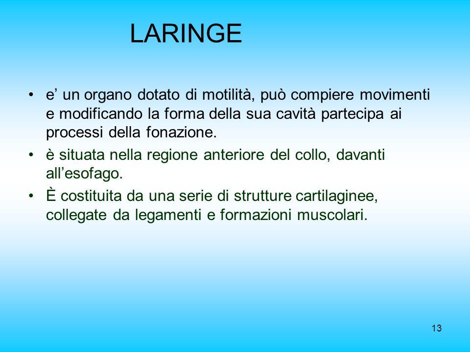 LARINGE e' un organo dotato di motilità, può compiere movimenti e modificando la forma della sua cavità partecipa ai processi della fonazione.