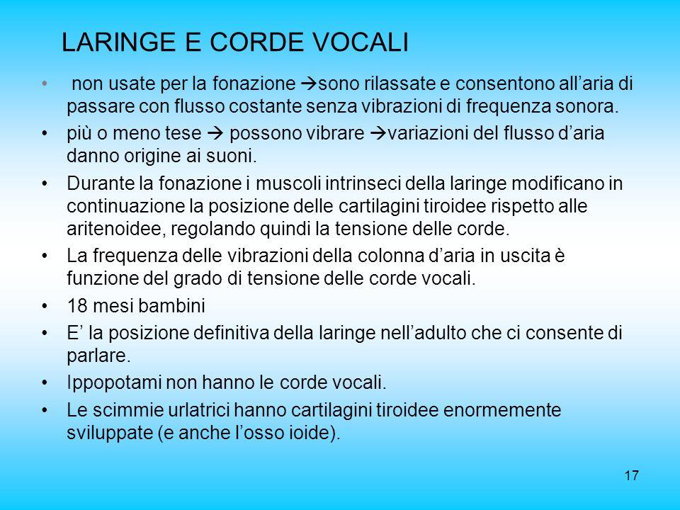 LARINGE E CORDE VOCALI