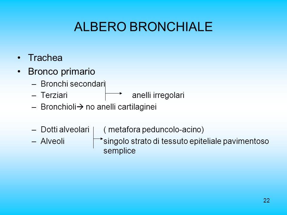ALBERO BRONCHIALE Trachea Bronco primario Bronchi secondari