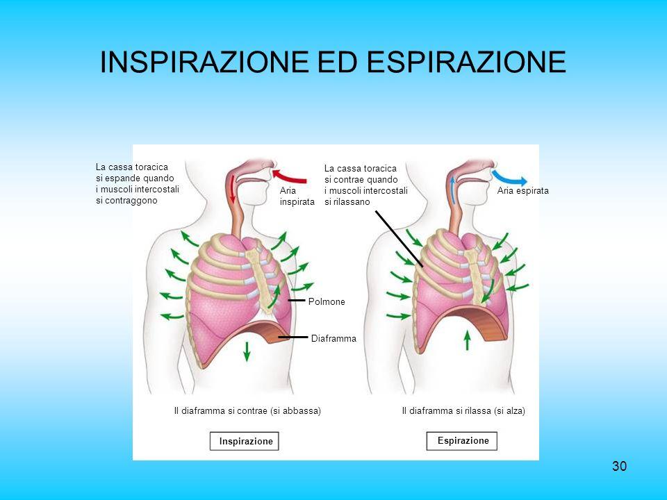 INSPIRAZIONE ED ESPIRAZIONE