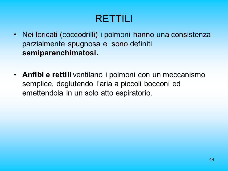 RETTILI Nei loricati (coccodrilli) i polmoni hanno una consistenza parzialmente spugnosa e sono definiti semiparenchimatosi.