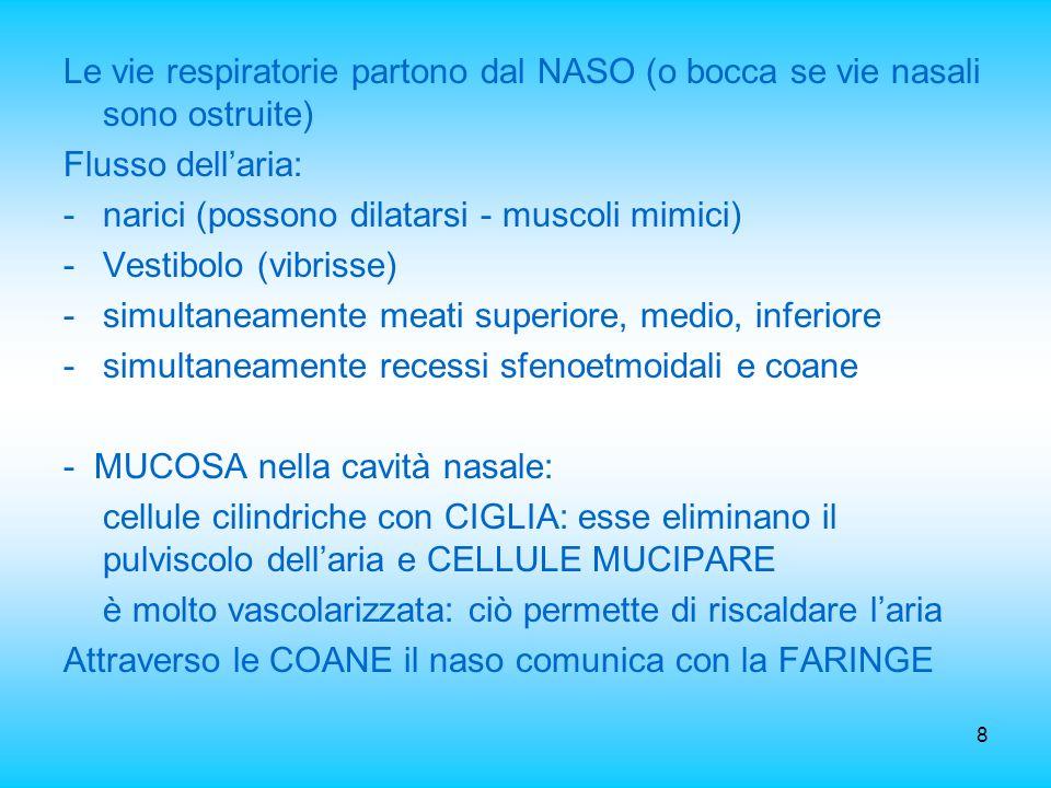 Le vie respiratorie partono dal NASO (o bocca se vie nasali sono ostruite)