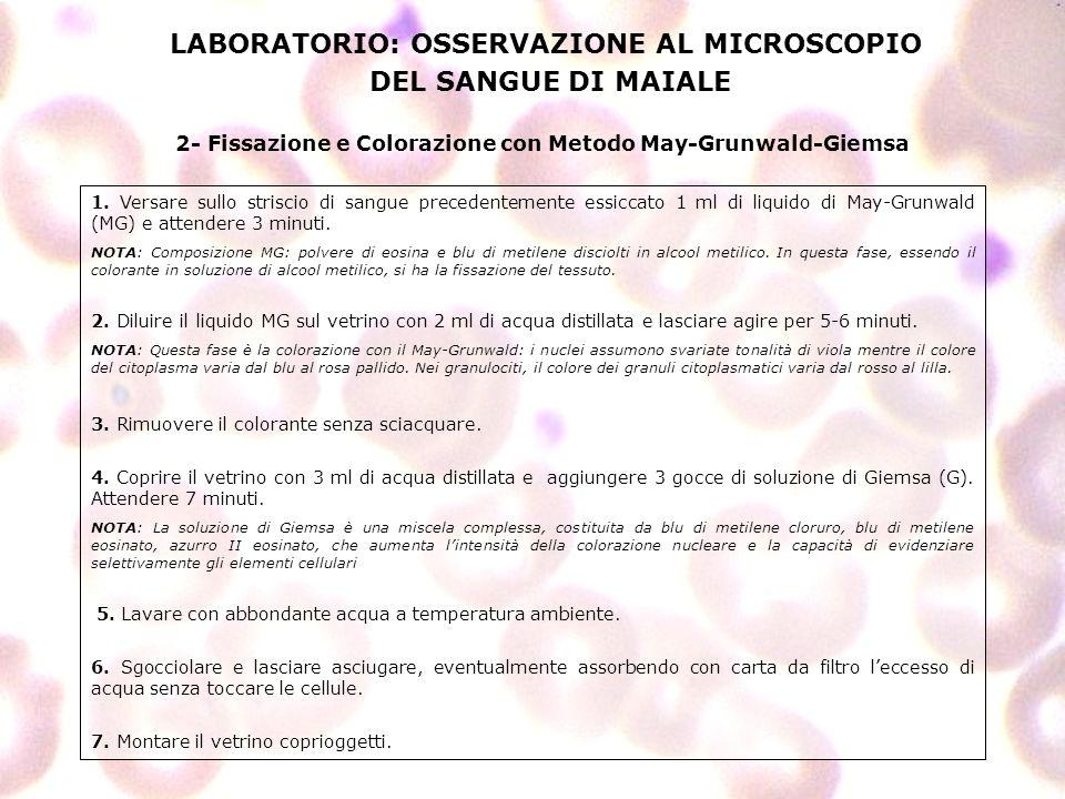 LABORATORIO: OSSERVAZIONE AL MICROSCOPIO