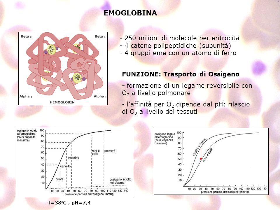 EMOGLOBINA 250 milioni di molecole per eritrocita