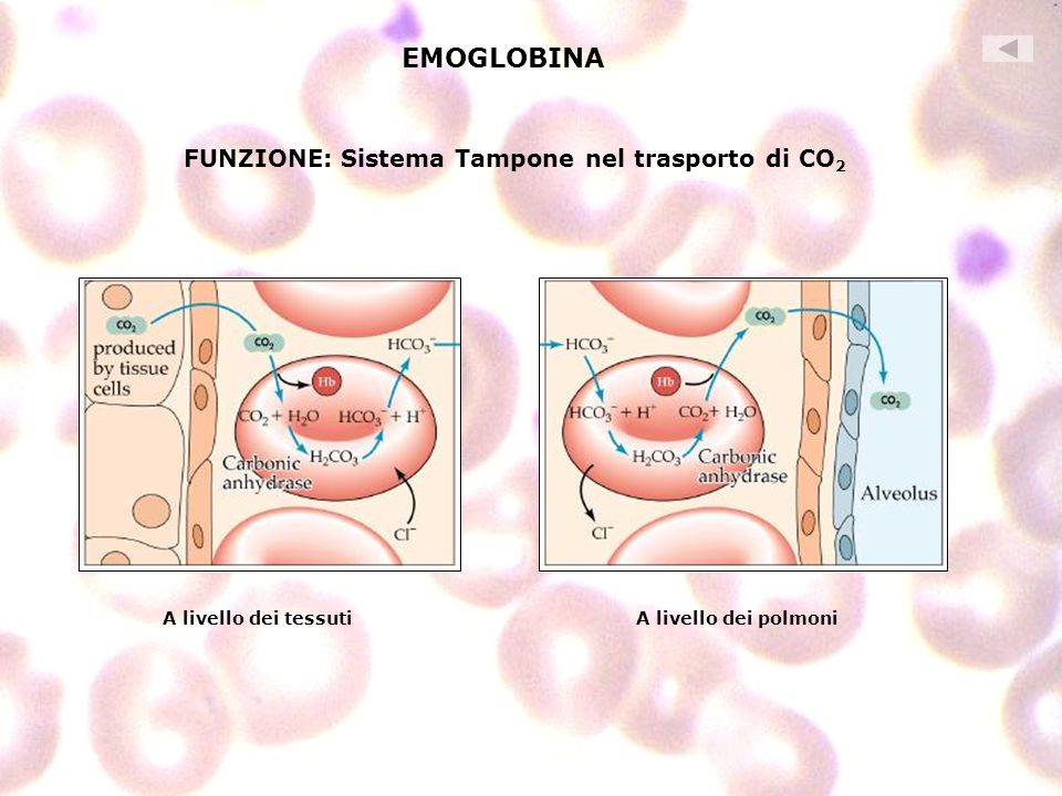 EMOGLOBINA FUNZIONE: Sistema Tampone nel trasporto di CO2