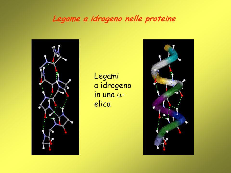 Legame a idrogeno nelle proteine