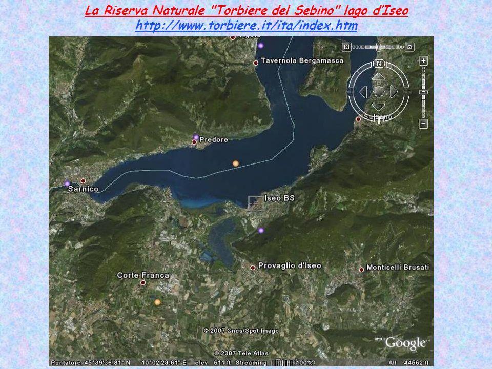 La Riserva Naturale Torbiere del Sebino lago d'Iseo http://www