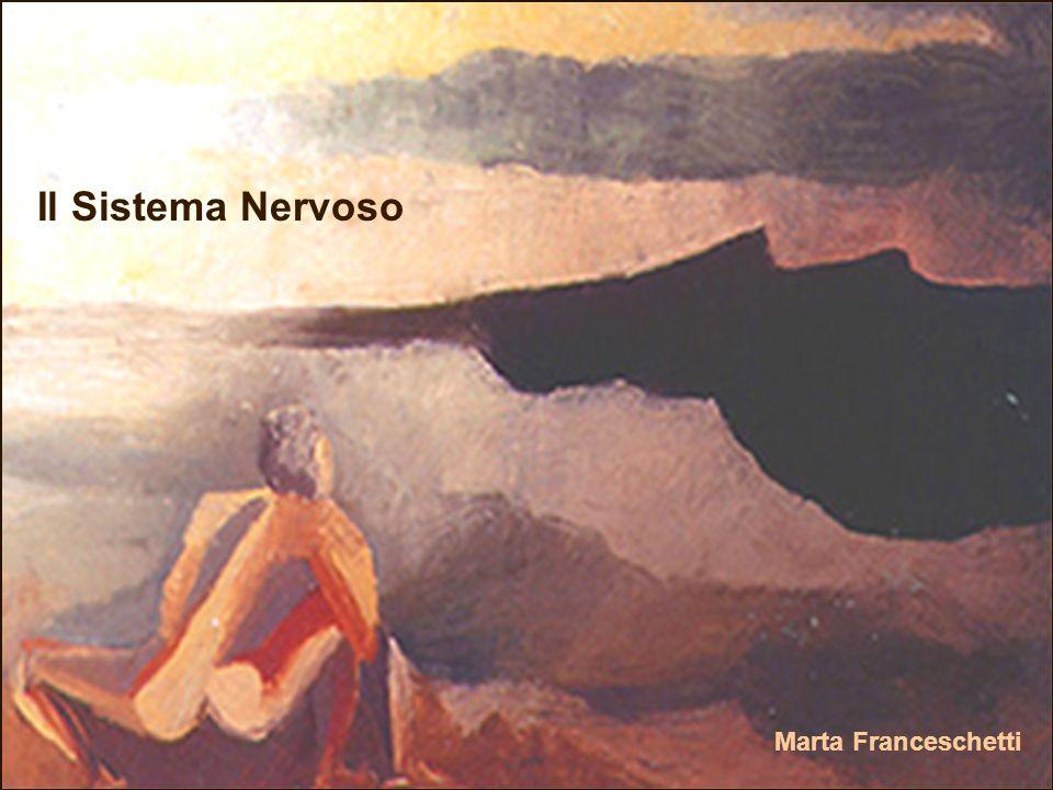 Il Sistema Nervoso Marta Franceschetti