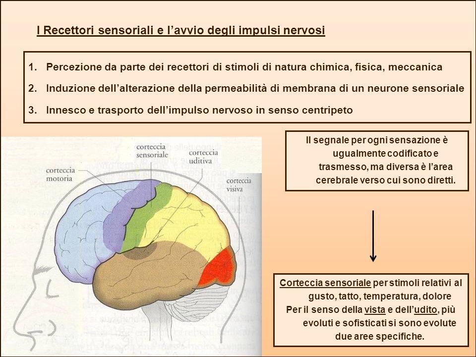 I Recettori sensoriali e l'avvio degli impulsi nervosi