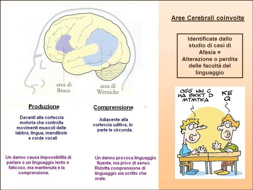 Aree Cerebrali coinvolte