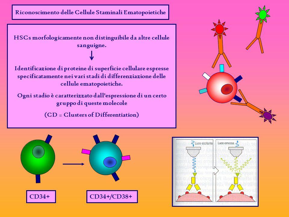 Riconoscimento delle Cellule Staminali Ematopoietiche