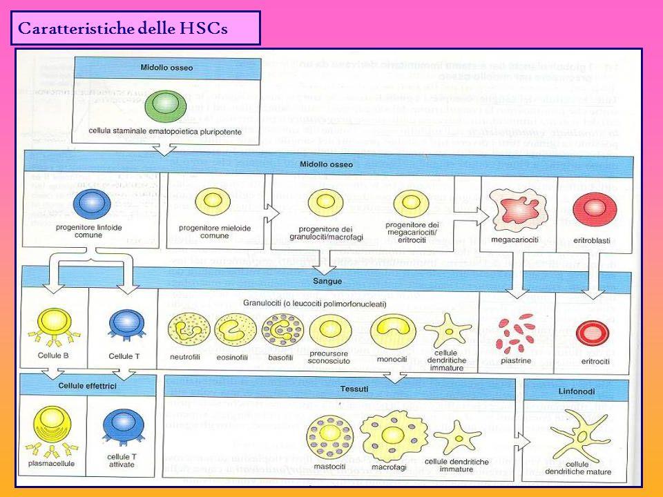 Caratteristiche delle HSCs