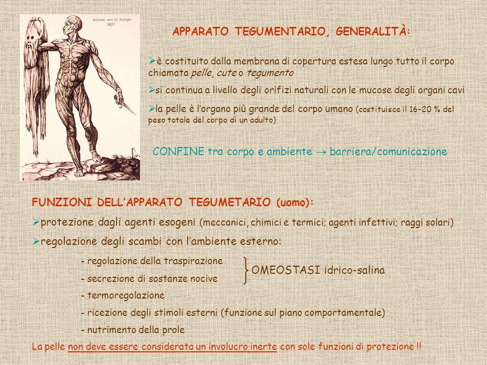 APPARATO TEGUMENTARIO, GENERALITÀ:
