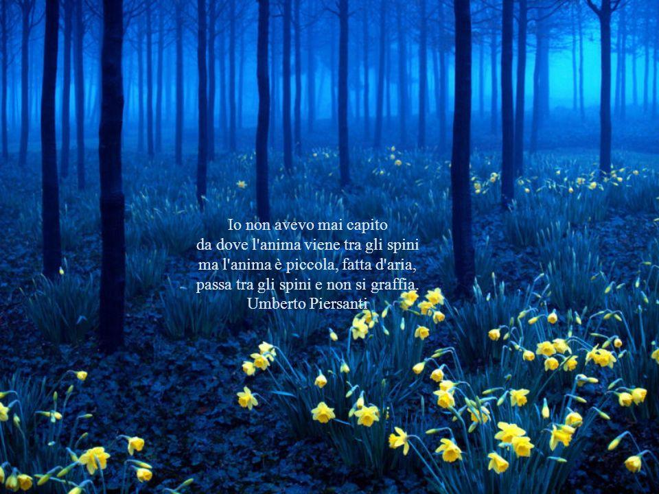 Io non avevo mai capito da dove l anima viene tra gli spini ma l anima è piccola, fatta d aria, passa tra gli spini e non si graffia.