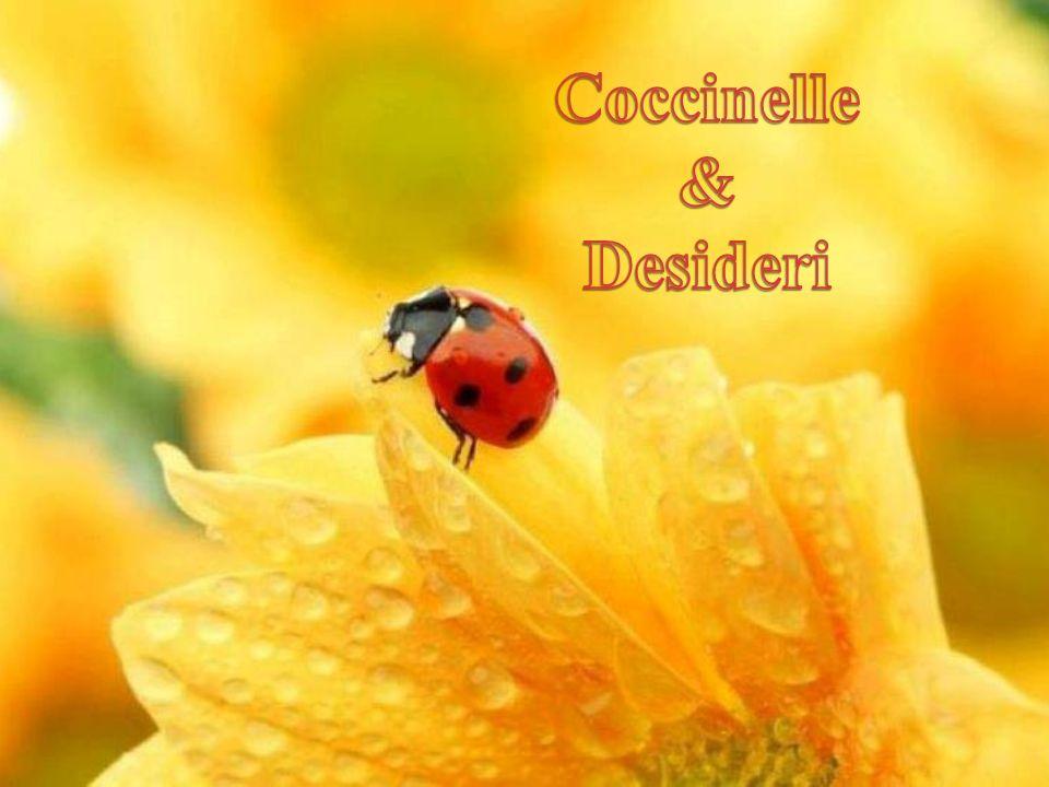 Coccinelle & Desideri