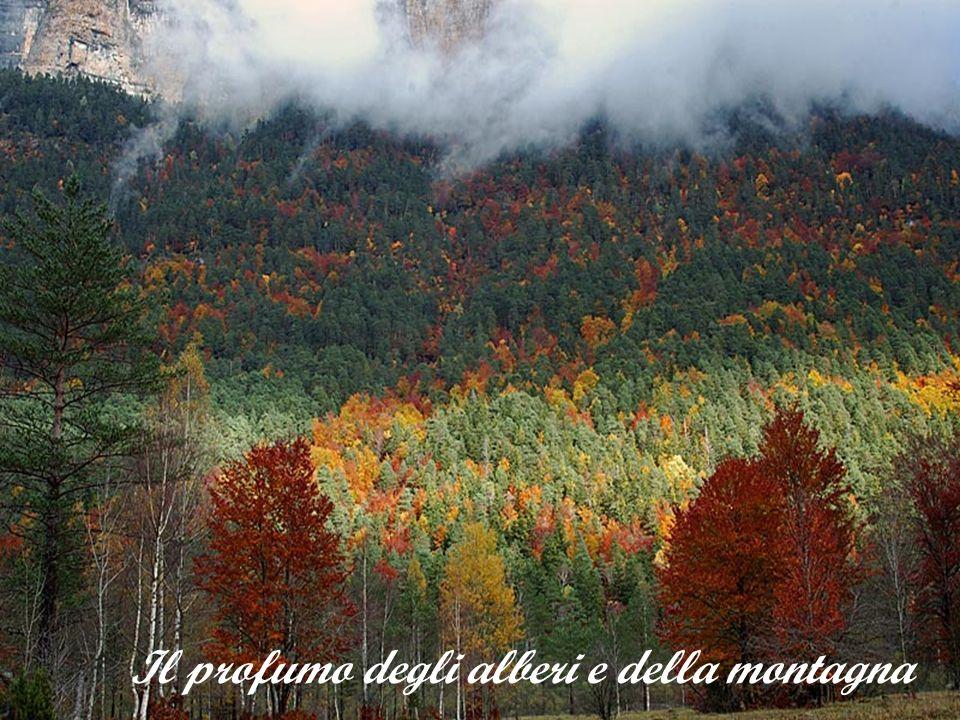 Il profumo degli alberi e della montagna