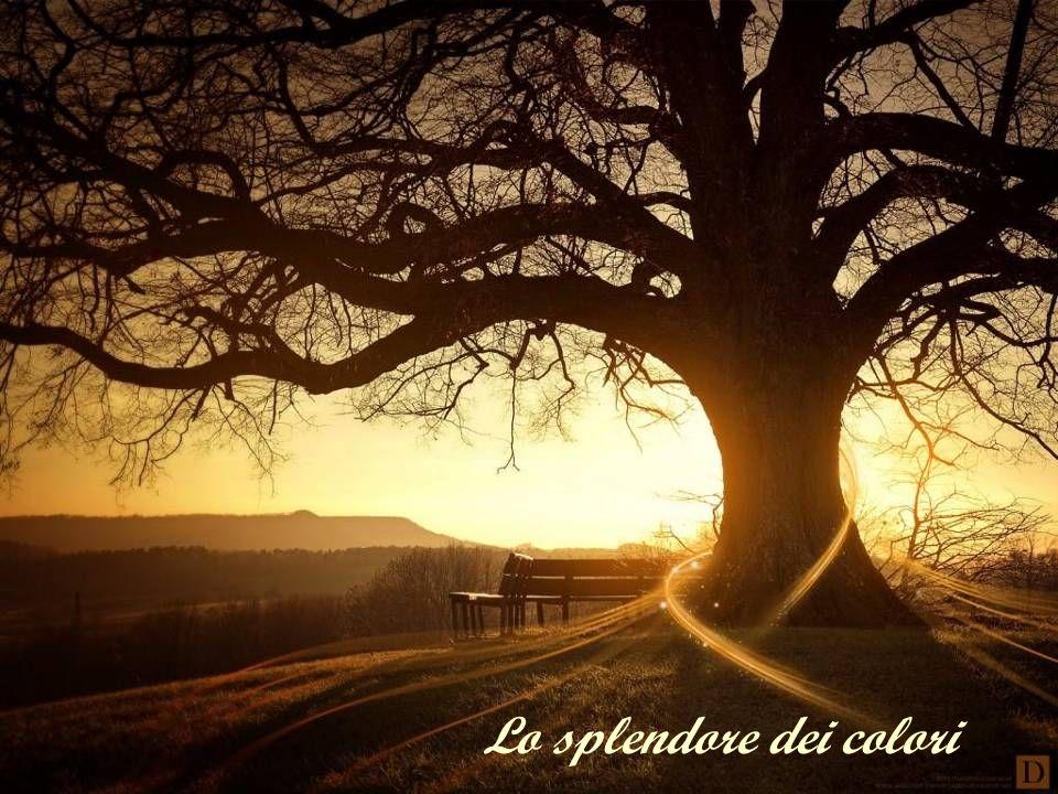 Lo splendore dei colori