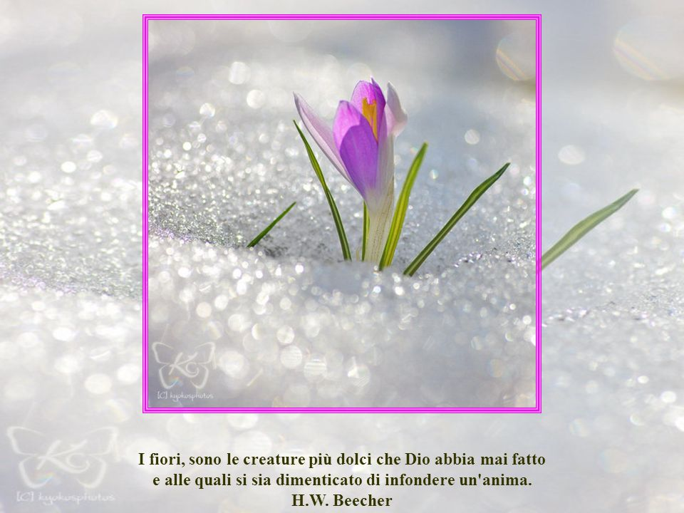 I fiori, sono le creature più dolci che Dio abbia mai fatto e alle quali si sia dimenticato di infondere un anima.