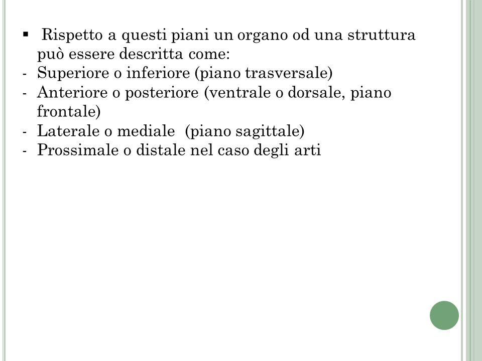 Rispetto a questi piani un organo od una struttura può essere descritta come:
