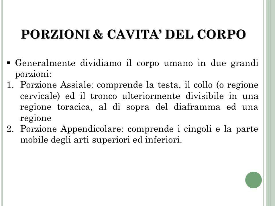 PORZIONI & CAVITA' DEL CORPO