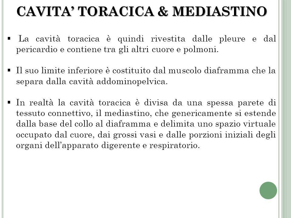 CAVITA' TORACICA & MEDIASTINO