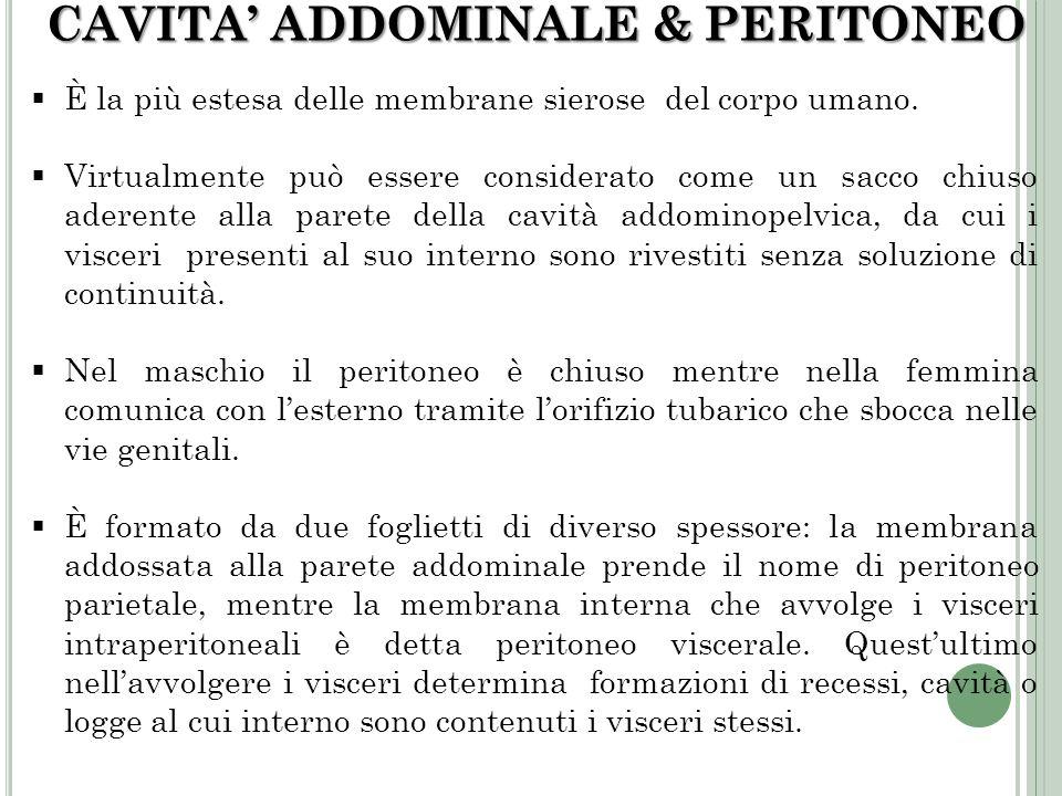 CAVITA' ADDOMINALE & PERITONEO