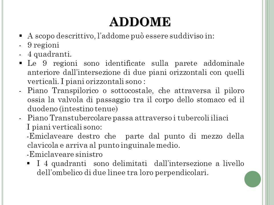ADDOME A scopo descrittivo, l'addome può essere suddiviso in: