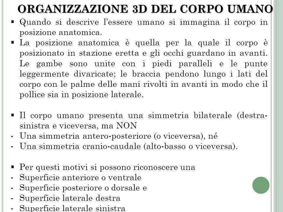 ORGANIZZAZIONE 3D DEL CORPO UMANO