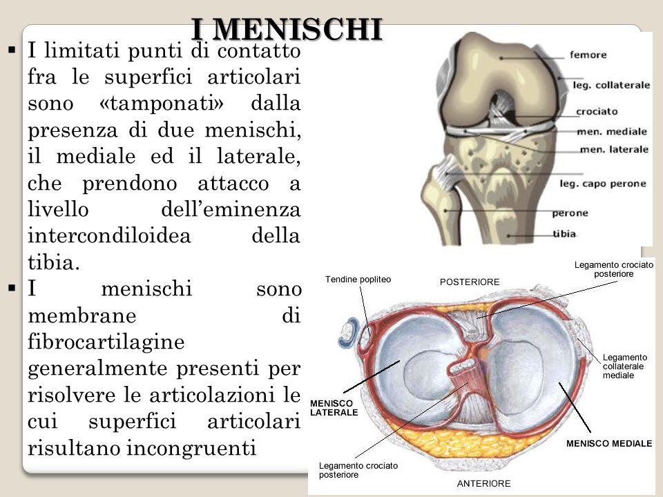 I MENISCHI