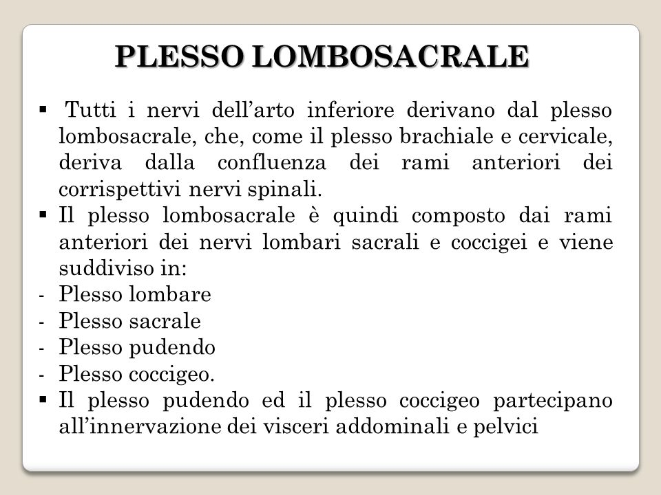 PLESSO LOMBOSACRALE