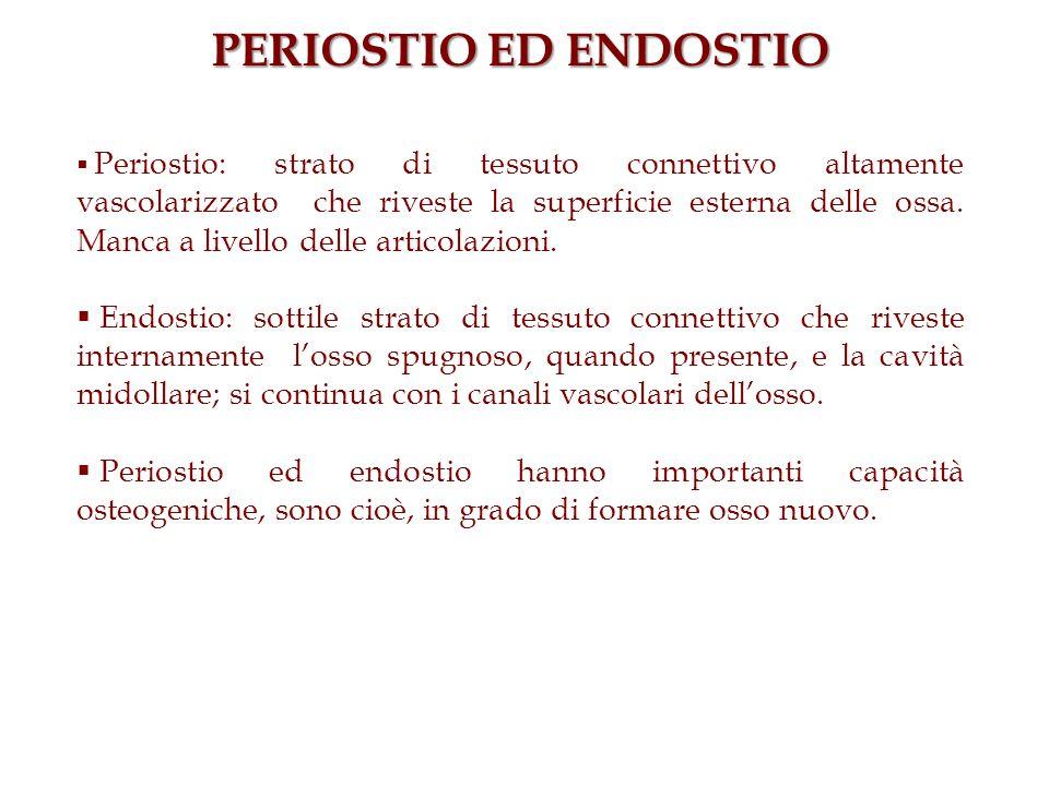 PERIOSTIO ED ENDOSTIO