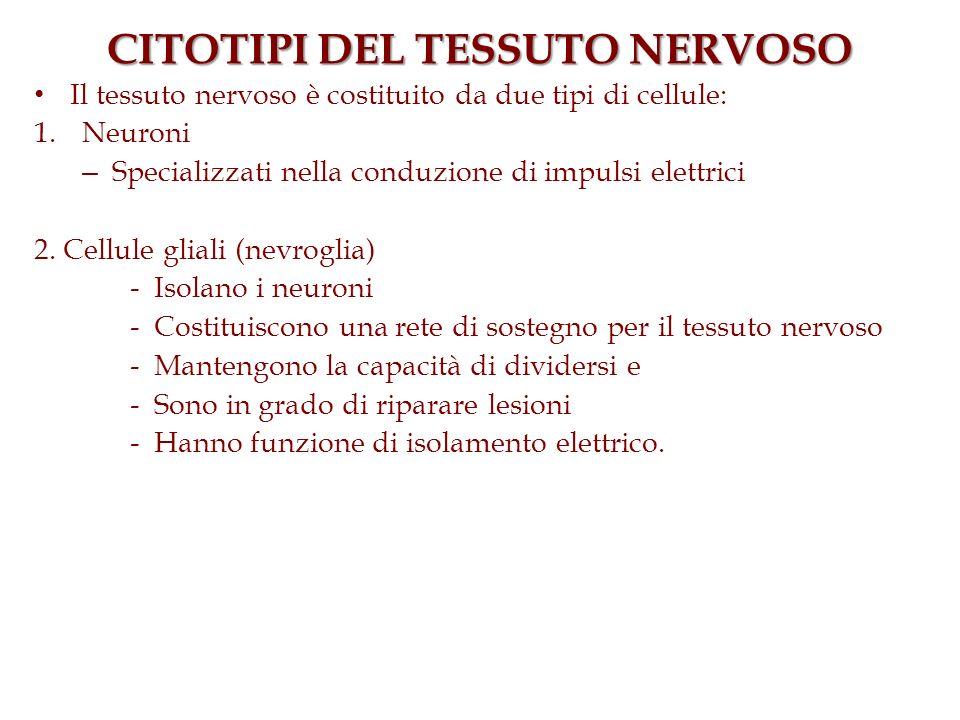 CITOTIPI DEL TESSUTO NERVOSO