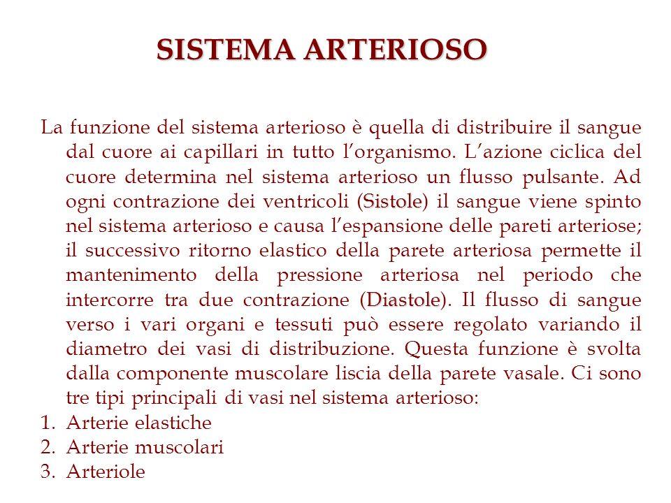 SISTEMA ARTERIOSO