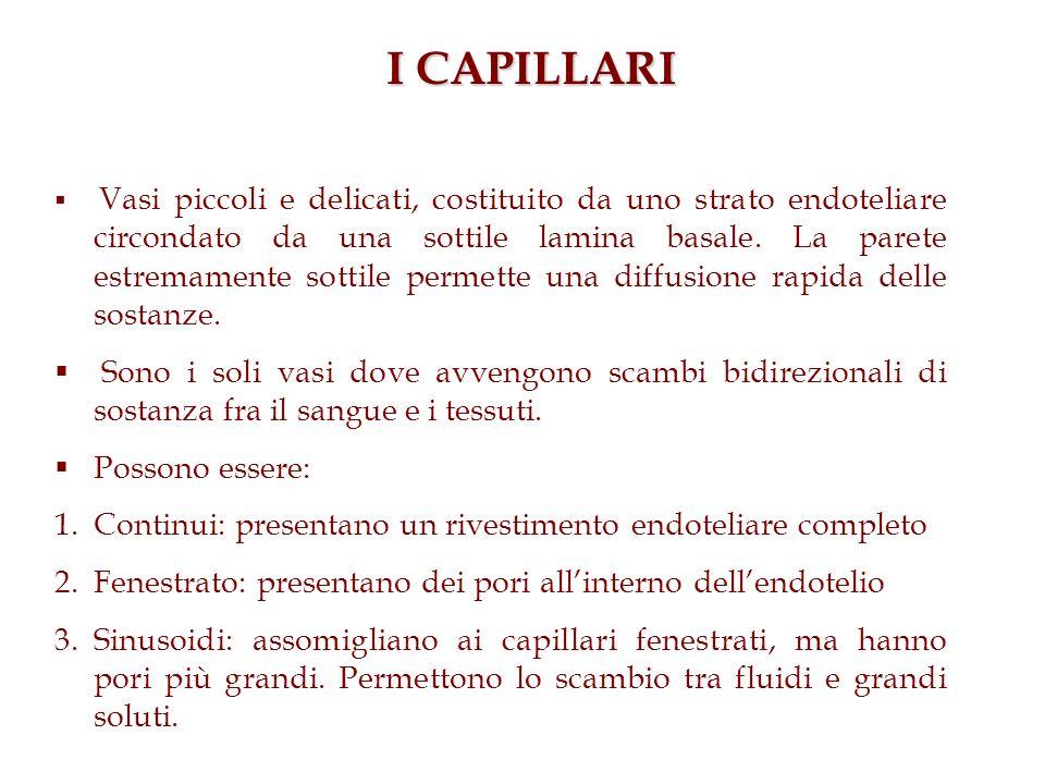 I CAPILLARI