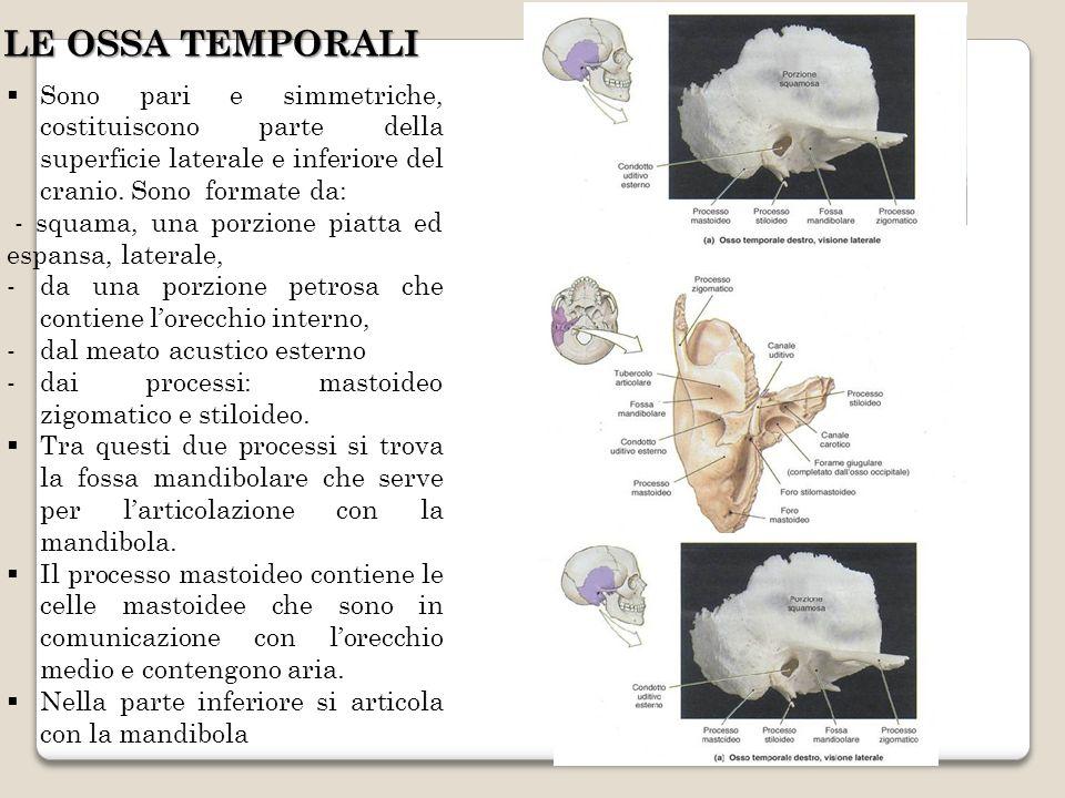 LE OSSA TEMPORALI Sono pari e simmetriche, costituiscono parte della superficie laterale e inferiore del cranio. Sono formate da: