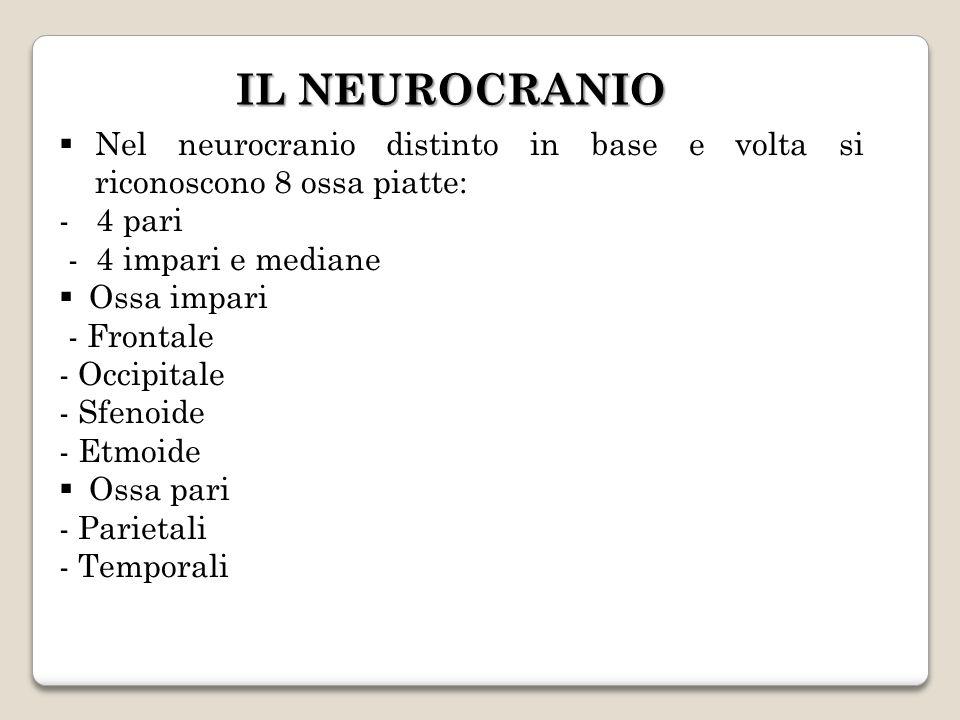 IL NEUROCRANIONel neurocranio distinto in base e volta si riconoscono 8 ossa piatte: - 4 pari. - 4 impari e mediane.
