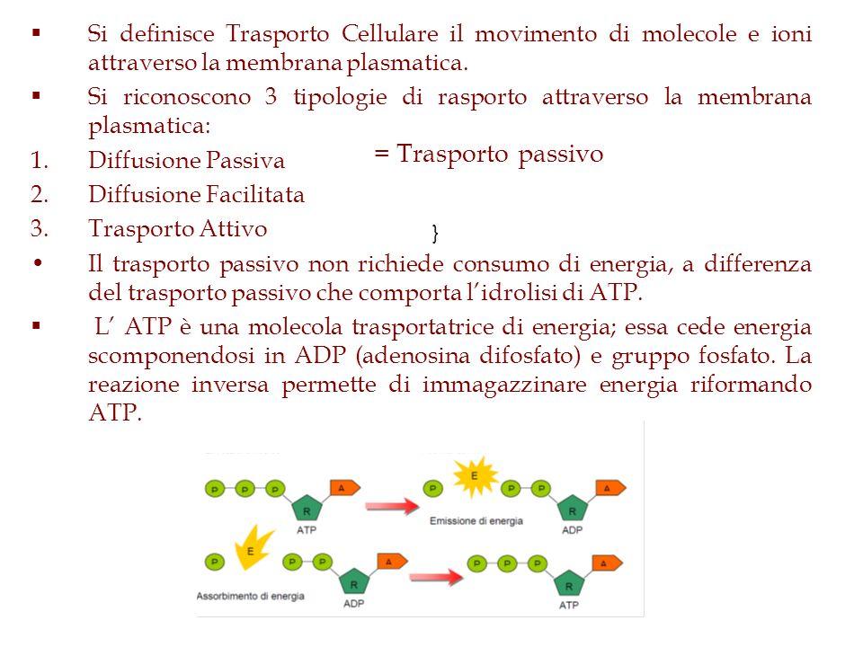 Si definisce Trasporto Cellulare il movimento di molecole e ioni attraverso la membrana plasmatica.