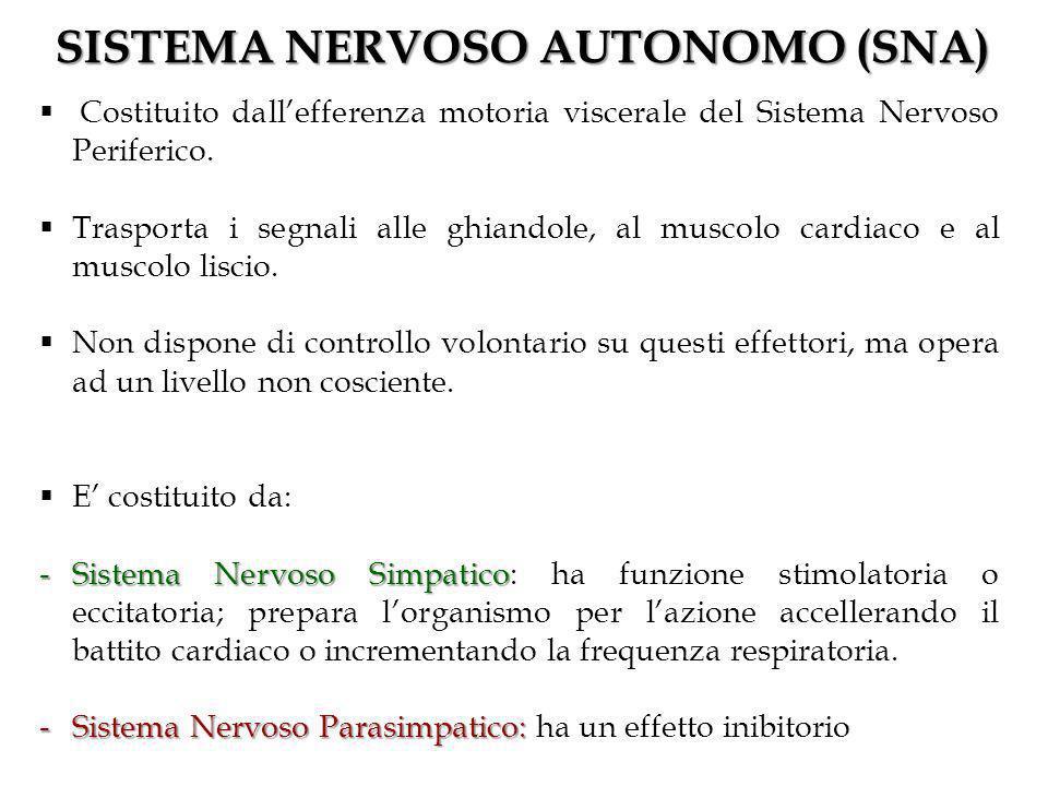 SISTEMA NERVOSO AUTONOMO (SNA)