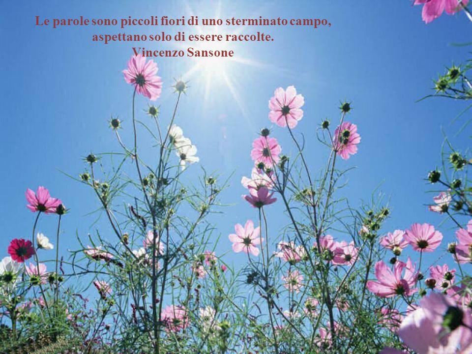 Le parole sono piccoli fiori di uno sterminato campo,