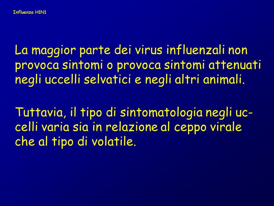 Influenza H1N1 La maggior parte dei virus influenzali non provoca sintomi o provoca sintomi attenuati negli uccelli selvatici e negli altri animali.