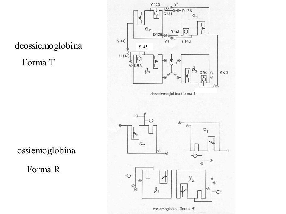 deossiemoglobina Y145 Forma T ossiemoglobina Forma R