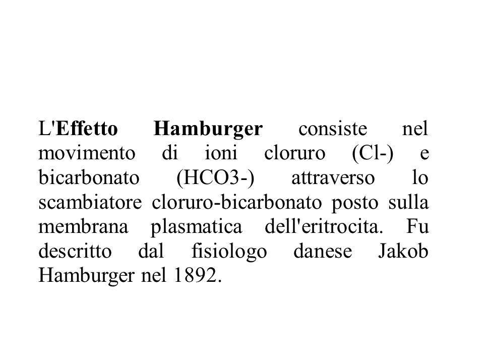 L Effetto Hamburger consiste nel movimento di ioni cloruro (Cl-) e bicarbonato (HCO3-) attraverso lo scambiatore cloruro-bicarbonato posto sulla membrana plasmatica dell eritrocita.
