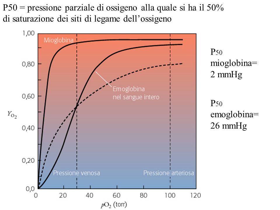 P50 = pressione parziale di ossigeno alla quale si ha il 50% di saturazione dei siti di legame dell'ossigeno
